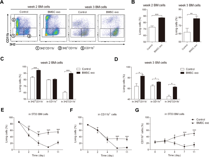 BMSC exosomes promote the survival of BM cells obtained from 5T33MM mice in intermediate and late stage of MM.