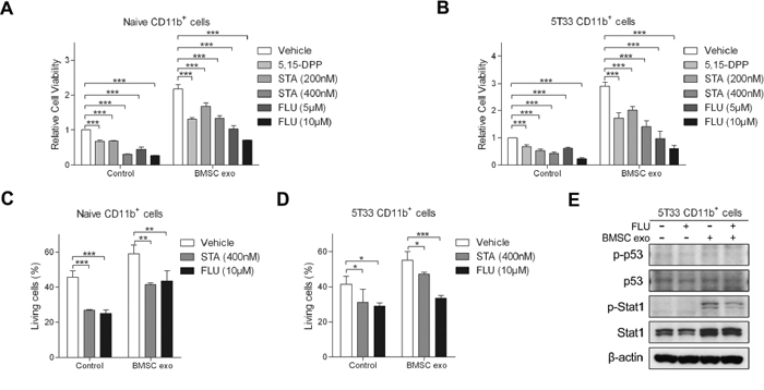 Inhibitors of STAT1 and STAT3 pathways suppress BMSC exosomes-induced survival of CD11b+ cells.