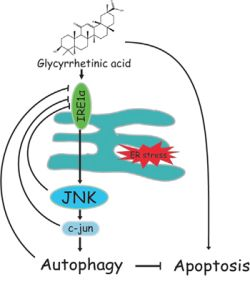 Schematic of GA-induced autophagy in NSCLC cells.