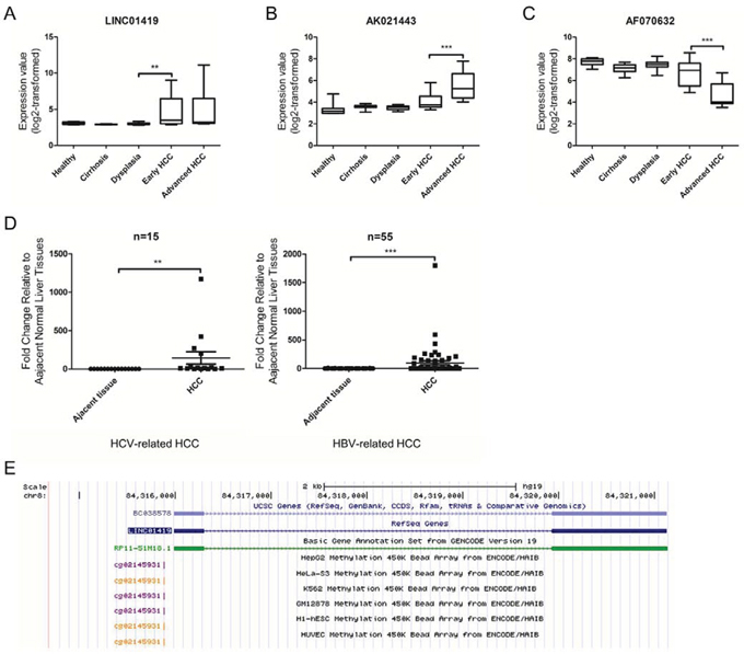 Expression of deregulated lncRNAs in HCC.