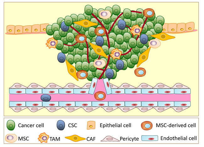 A schematic illustration showing the different types of cells involved in tumor progression.