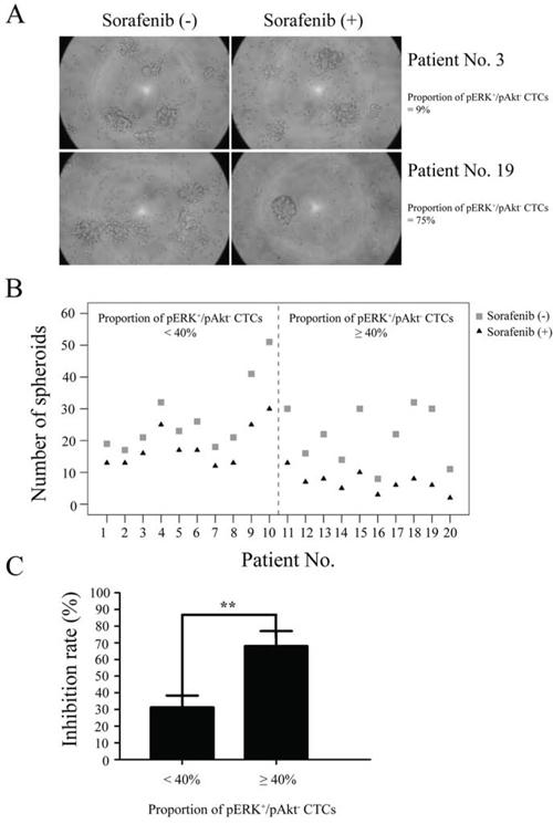 Sensitivity of circulating tumor cells (CTCs) to sorafenib.