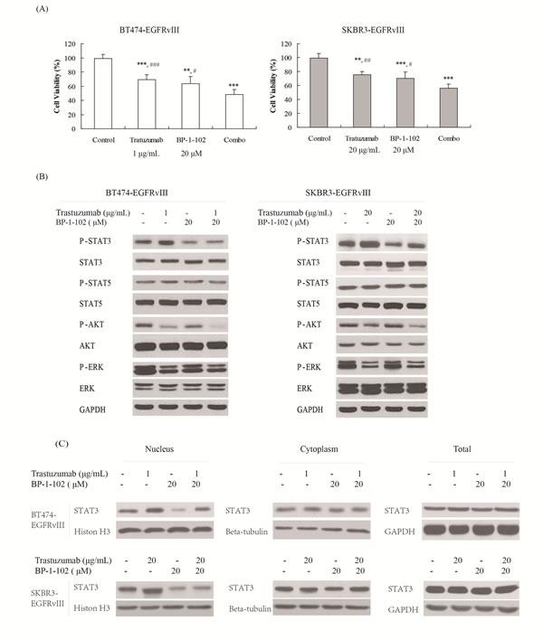 STAT3 inhibitor increased the antitumor efficacy of trastuzumab in EGFRvIII