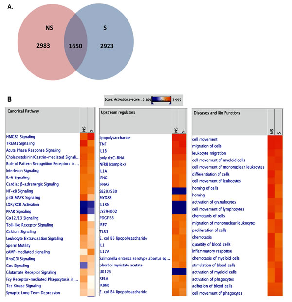 Transcriptome analysis of VZV-infected NHDFs.