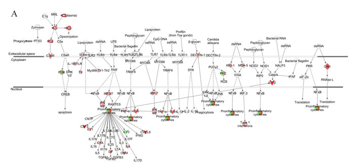 Network analysis for pattern recognition receptor of VZV-infected NHDFs.