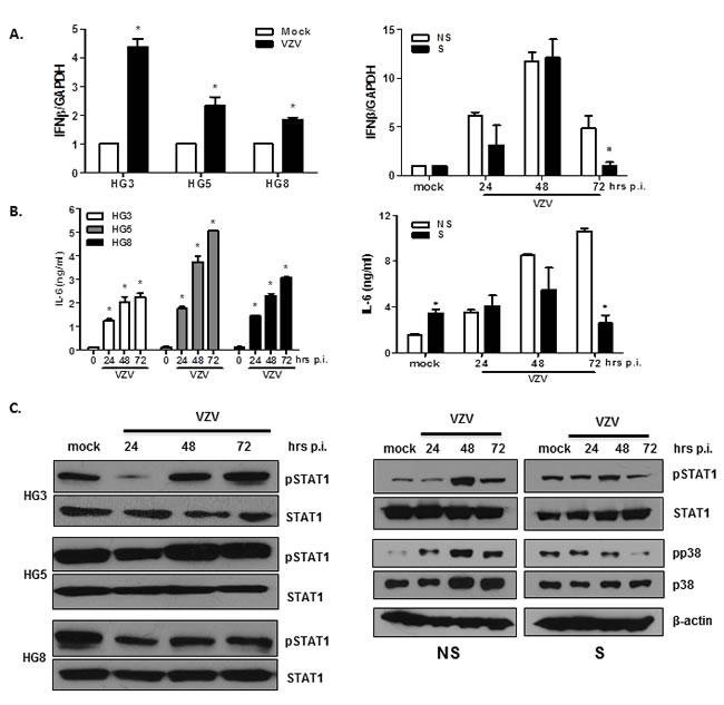 Validation of DEGs in VZV-infected non-senescent and senescent cells that are involved in antiviral responses and inflammation.