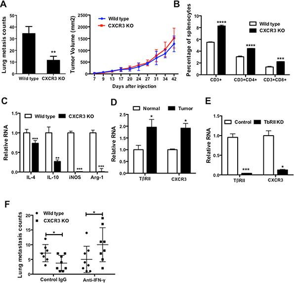 Figure 5. CXCR3 promotes lung metastasis and impairs host anti-tumor immunity.