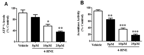 4-HNE reduces SAEC ATP% levels and aconitase activity.