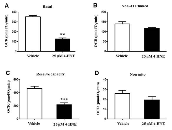 Bioenergetic and oxygen consumption evaluation of SAEC mitochondria.