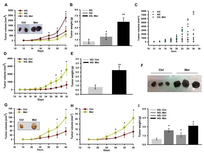 Metformin promotes melanoma tumor growth in mice.