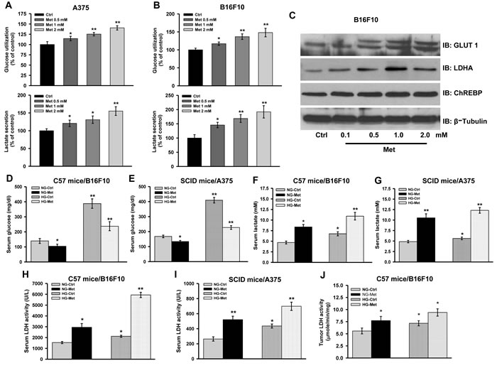 Complex I inhibition induces aerobic glycolysis.