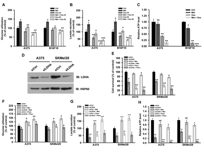 Inhibition of complex I and lactate generation together induces metabolic catastrophe.