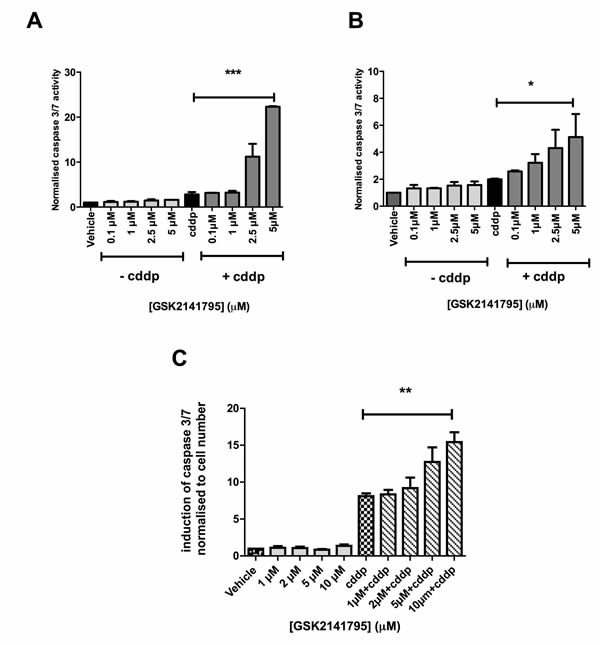 Caspase 3/7 activity in SKOV3 and PEO4 cells exposed to GSK2141795 as a single agent or in combination with cisplatin.