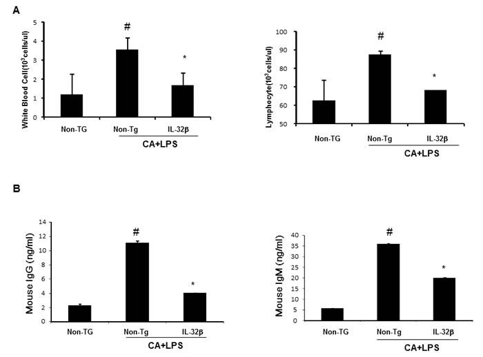 Effect of IL32β on immune responses in inflammatory arthritis IL32β mice.