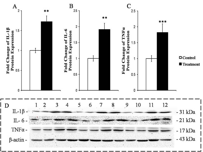 Measurement of the protein expressions of the primary pro-inflammatory cytokines in the livers of the goats from the control and treatment groups.