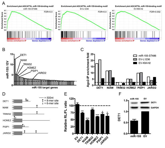 Identification of miR-155 target genes using Ago2-immunoprecipitation.