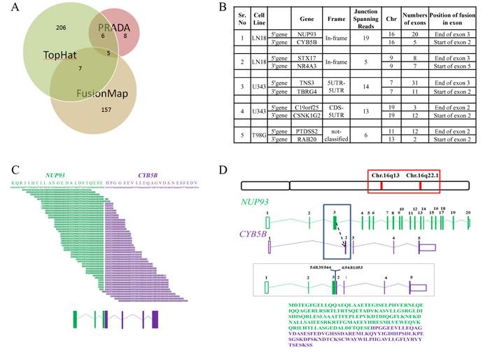 Gene fusion analysis.
