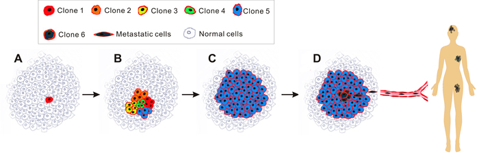Schematic of clonal evolution model.