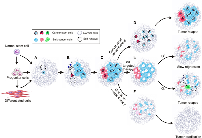 Schematic of current cancer stem cell theory.