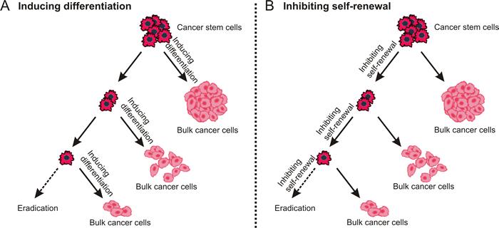 Destemming cancer stem cells.