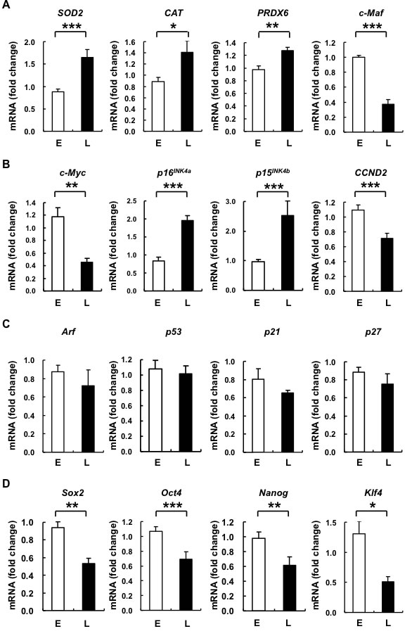 L-hAMSCs show transcriptional increases in expression of antioxidant enzymes, cell cycle arrest genes p16