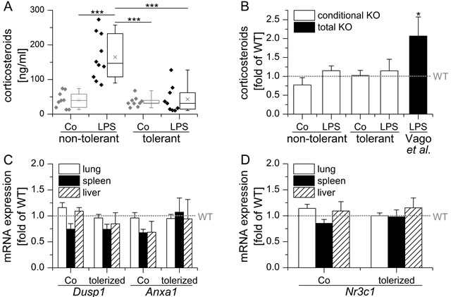 Conditional LysM/Cre mediated GILZ KO does neither influence endogenous GC levels nor GR activity.