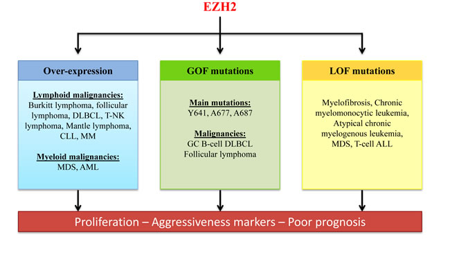 Role of EZH2 deregulation in hematological malignancies.