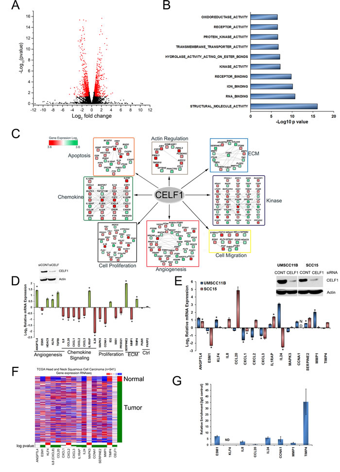 Next generation sequencing (RNA-seq) identifies novel targets regulated by CELF1.