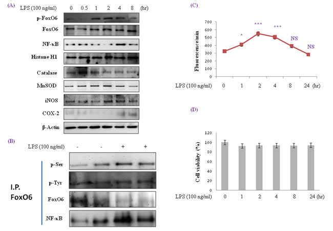 Enhancement of FoxO6 phosphorylation and NF-κB protein levels in LPS-treated HepG2 cells.