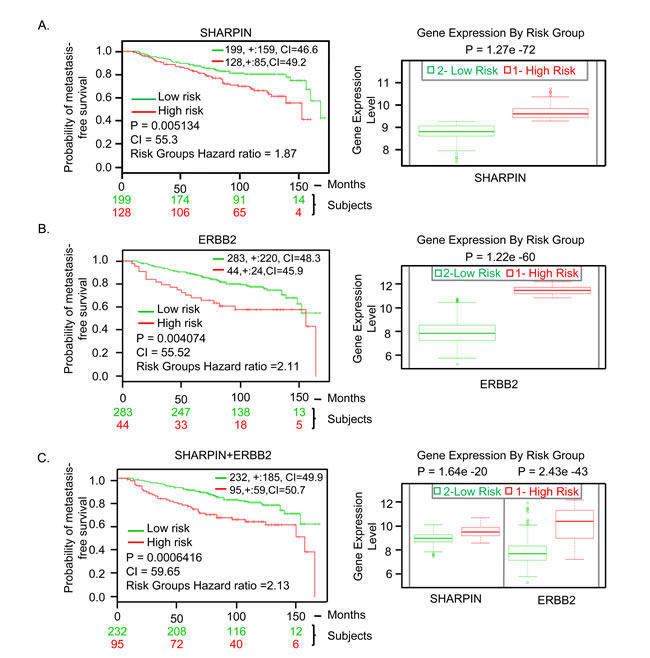 SHARPIN gene expression in BC patients predicts clinical outcomes.