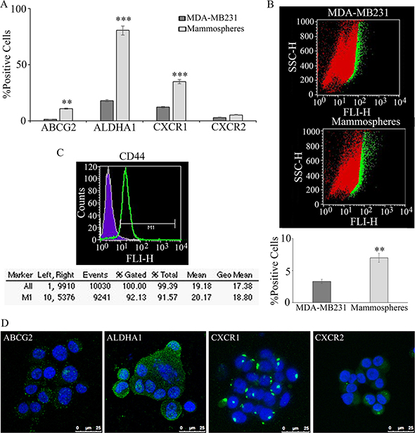 Mammospheres formation and characterization from MDA-MB231: breast tumor stem cell marker enrichment, with respect to the starting cell line, such as ABCG2 and ALDHA1, CXCR1 and CXCR2, evalutated by cytofluorimetry, is reported in (A).