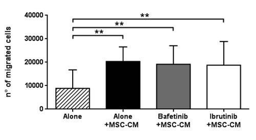 MSC-conditioned medium preserves CLL B cell migration despite kinase inhibitors treatment.