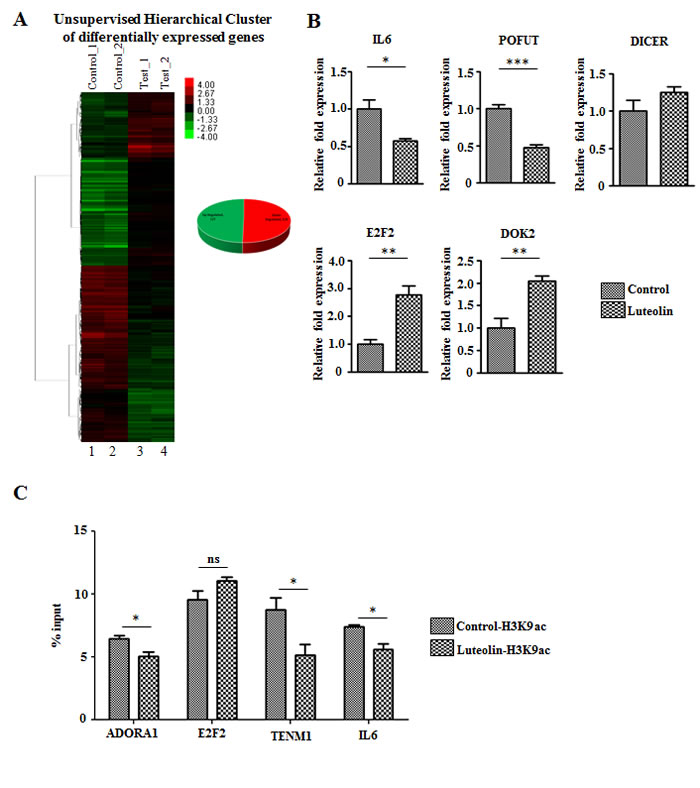 Luteolin mediated p300 acetyltransferase inhibition leads to an alteration in gene expression profile.