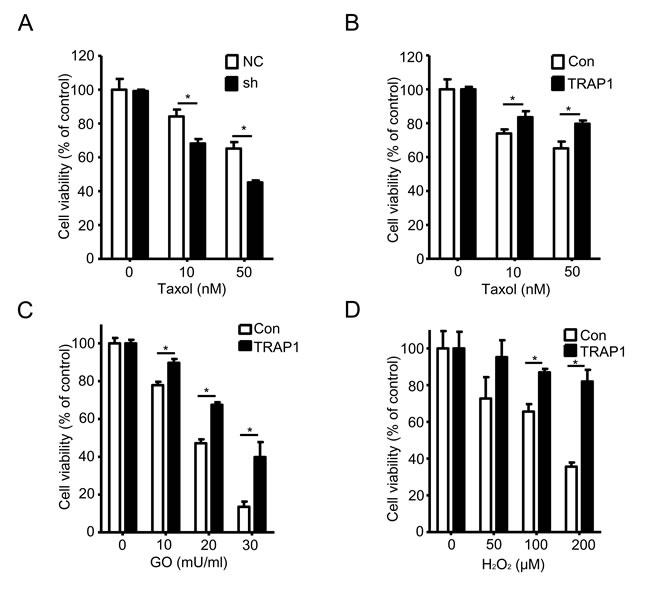 TRAP1 level determines the sensitivity to stress stimuli.