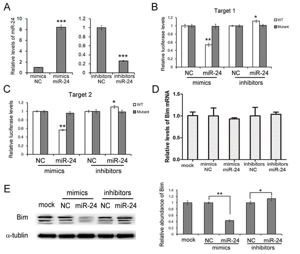 miR-24 suppresses Bim expression in PANC1 cells.