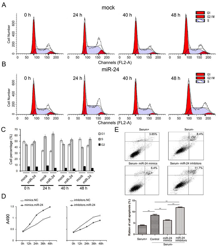 miR-24 promotes cell growth while inhibits apoptosis of PANC1 cells.