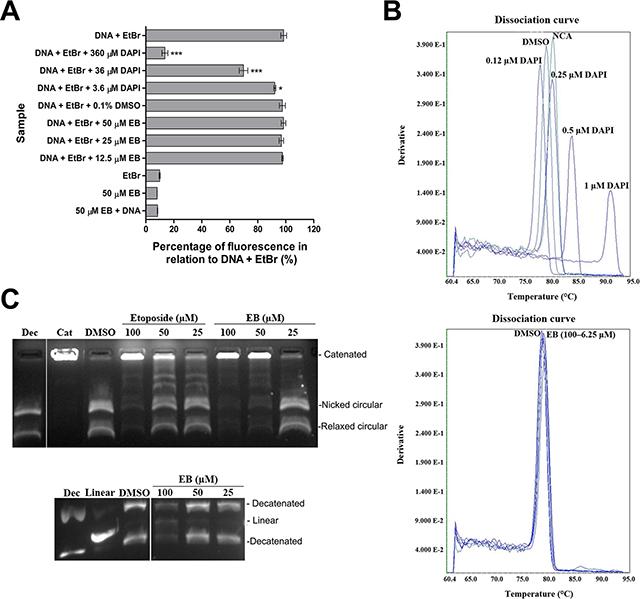 EB inhibited topoisomerase II.