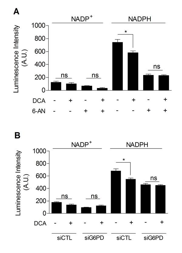 DCA decreases PPP activity.