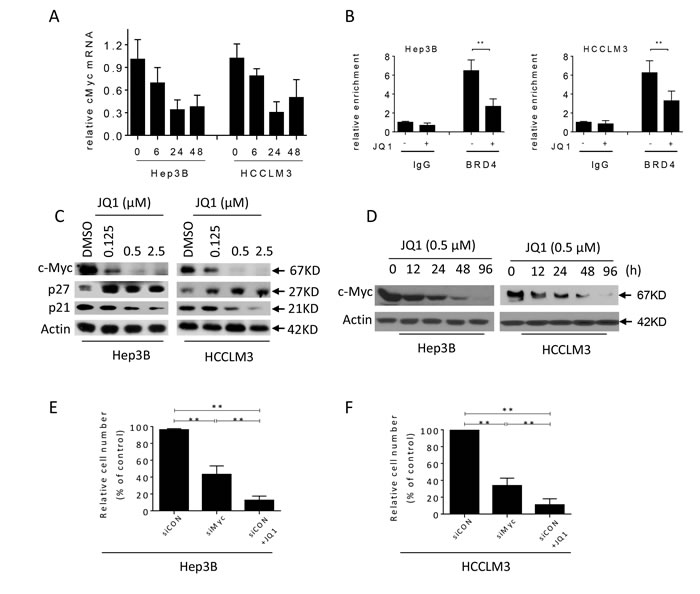 JQ1 suppresses the expression of c-Myc in HCC cells.