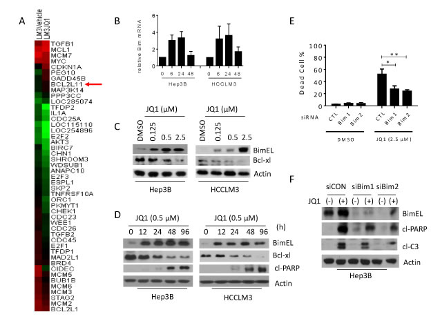 JQ1-induced anti-cancer activity requires Bim up-regulation in HCC cells.