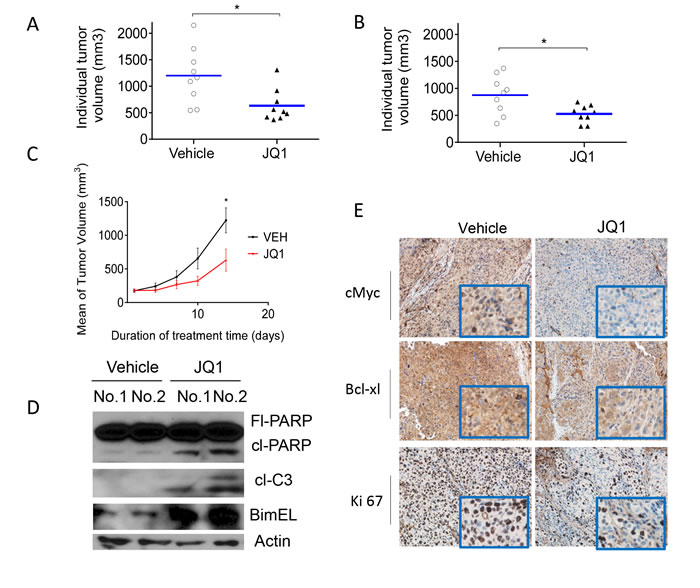 JQ1 inhibits tumor growth in subcutaneous HCC models.