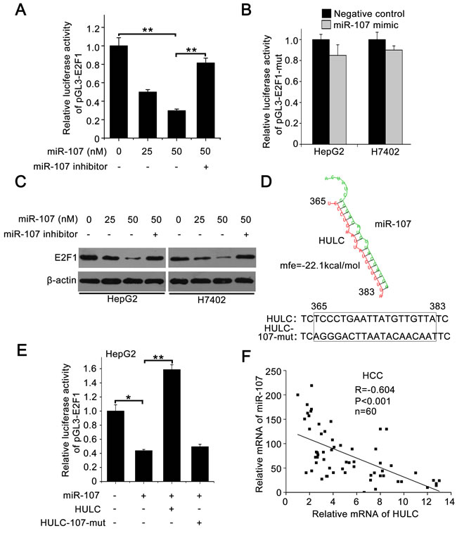 HULC increases E2F1 by sequestering miR-107.