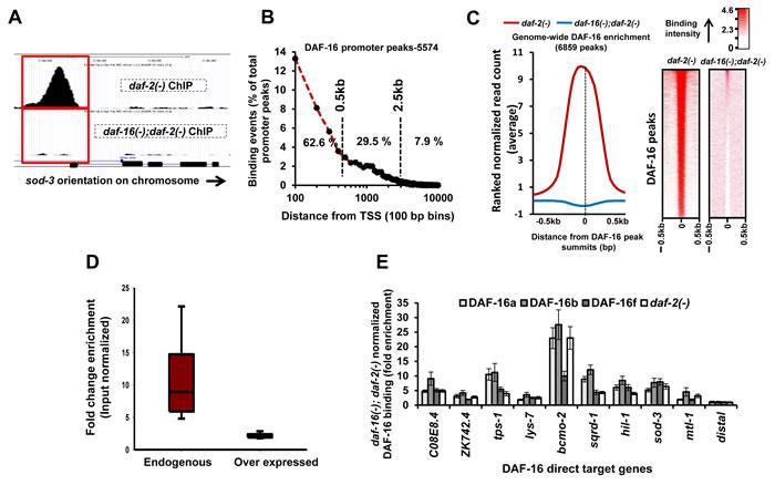 Genome-wide recruitment profile of DAF-16/FOXO.