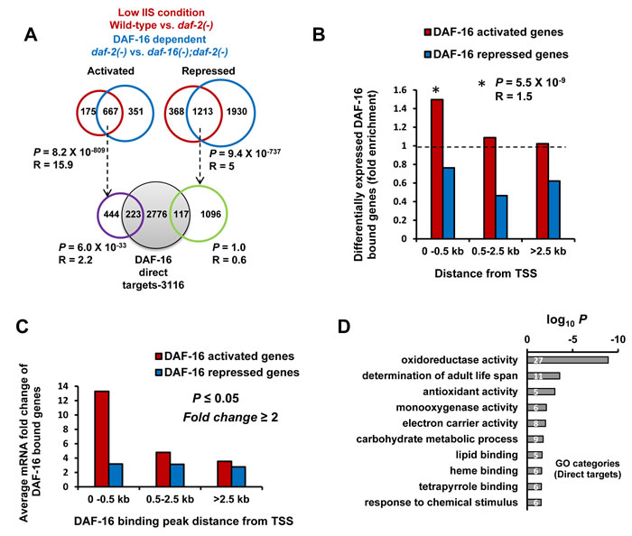Promoter-proximal binding of DAF-16 ensures optimal transcriptional response.