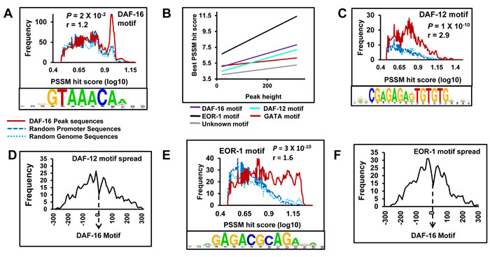 DAF-12 and EOR-1 may bind chromatin at close proximity to DAF-16 during low IIS.