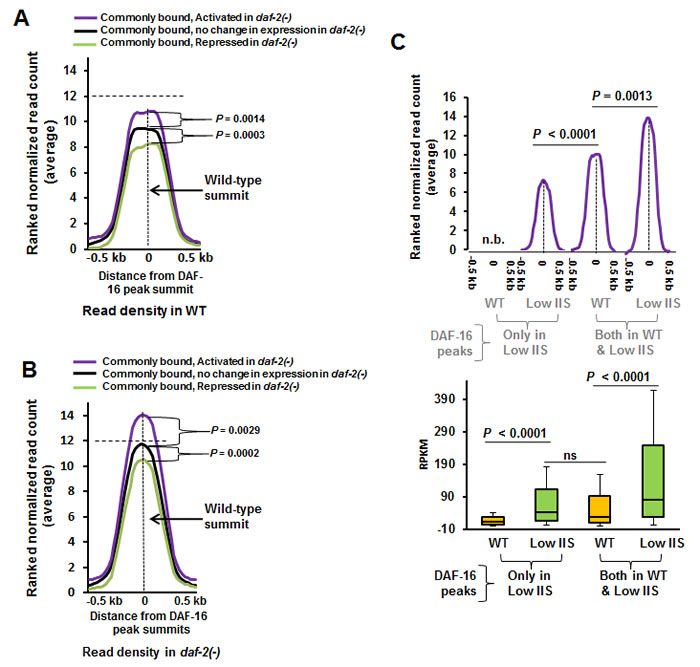 Genes that are activated under low IIS have higher DAF-16 recruitment in WT.