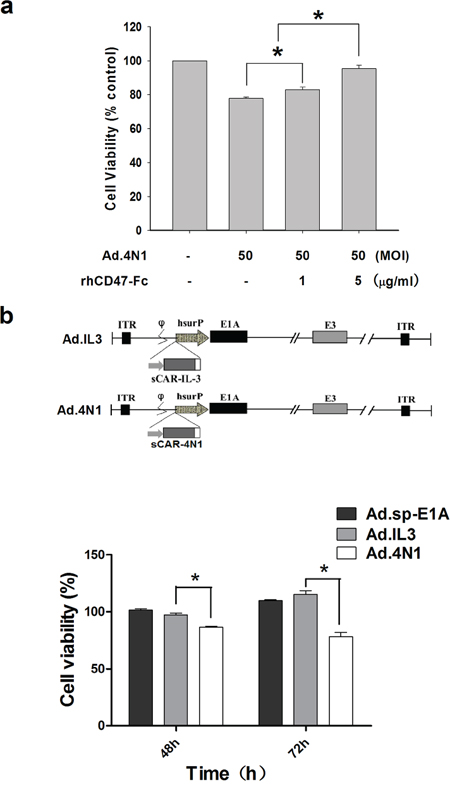 Ad.4N1 suppressed leukemia cell proliferation through the 4N1-CD47 interaction.
