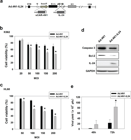 Ad.4N1-IL24 elicited higher cytotoxicity to leukemia cells in vitro.