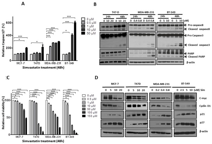 Simvastatin induced apoptosis and inhibited proliferation in breast cancer cells.