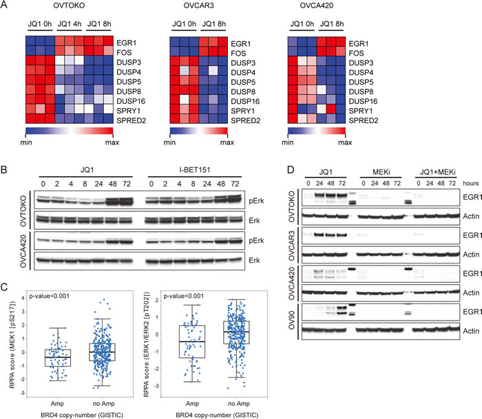 BET bromodomain inhibitors activated the MAPK pathway in ovarian cancer.